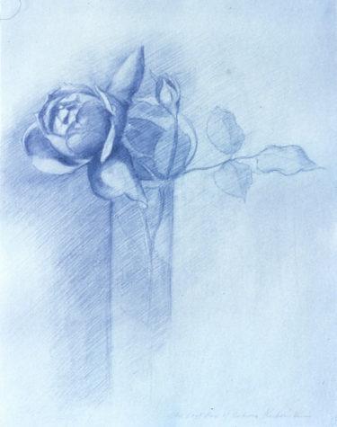 rose-study