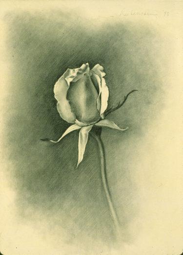 yellowrose-study01