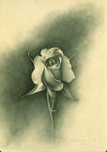 yellowrose-study02
